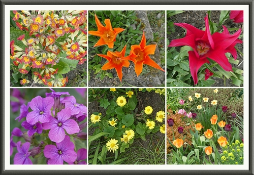 tulips, honesty, doronicum, cowslips