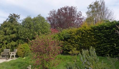 venetia's garden