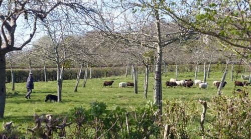 venetia's pastoral