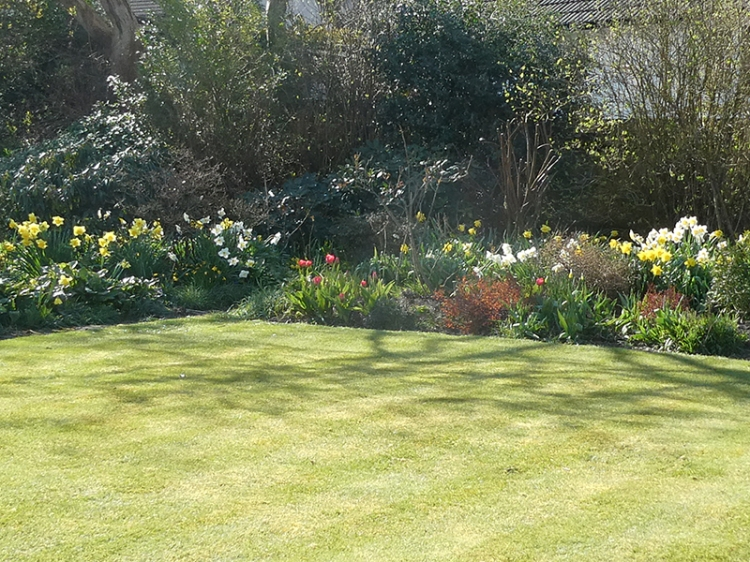view from new bench with tulips