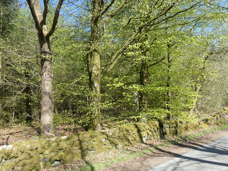 wall and trees broomholm road