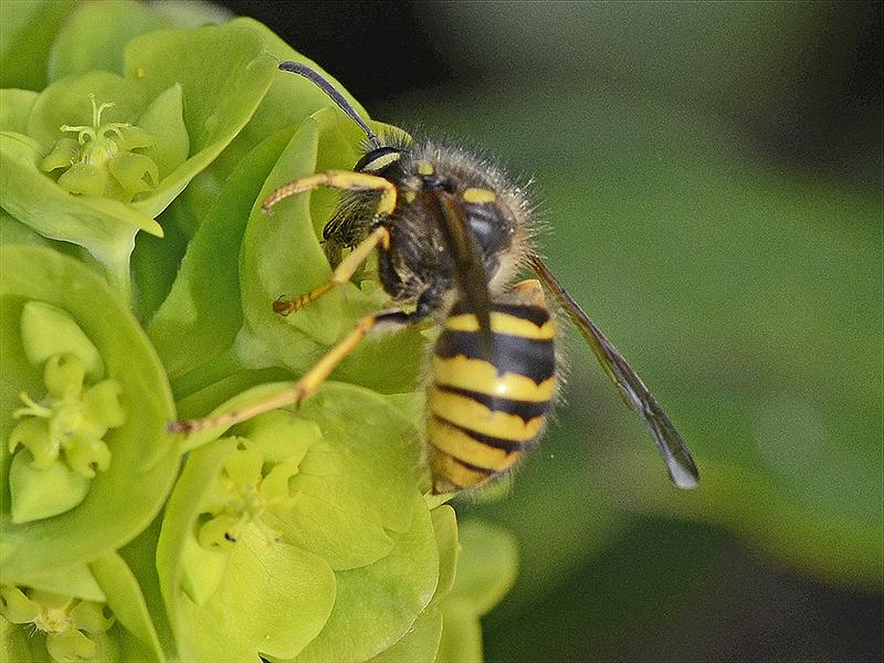 wasp like creature