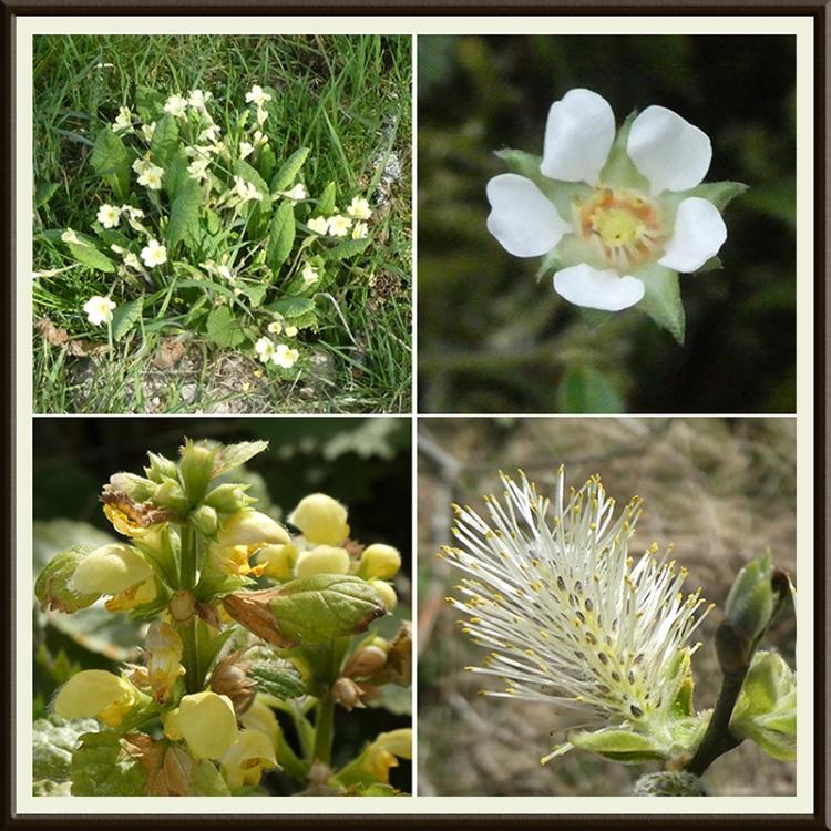 wild flowers april 2
