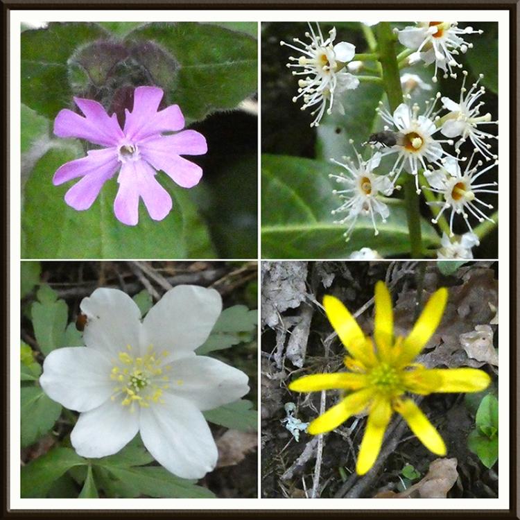 wild flowers april