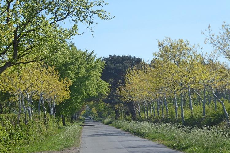 avenue at rockliffe