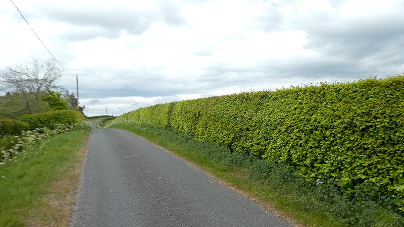 beech hedge tarcoon