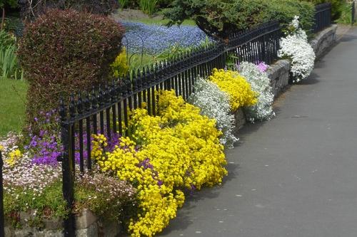 Buccleuch Terrace garden