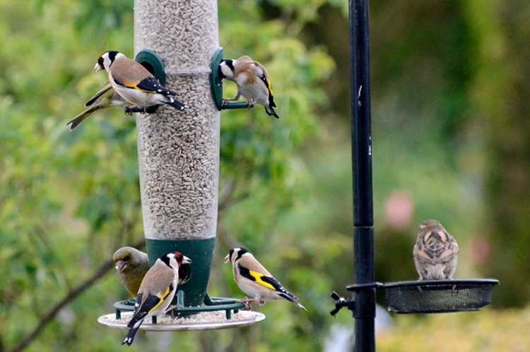 busy feeder May