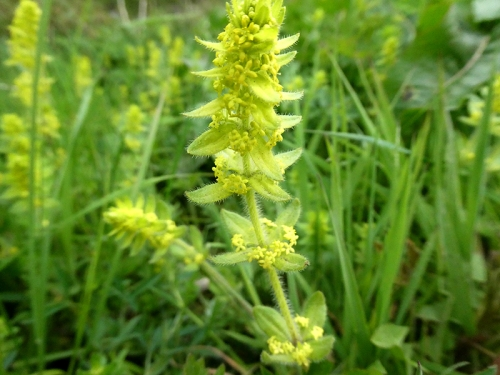 crosswort full