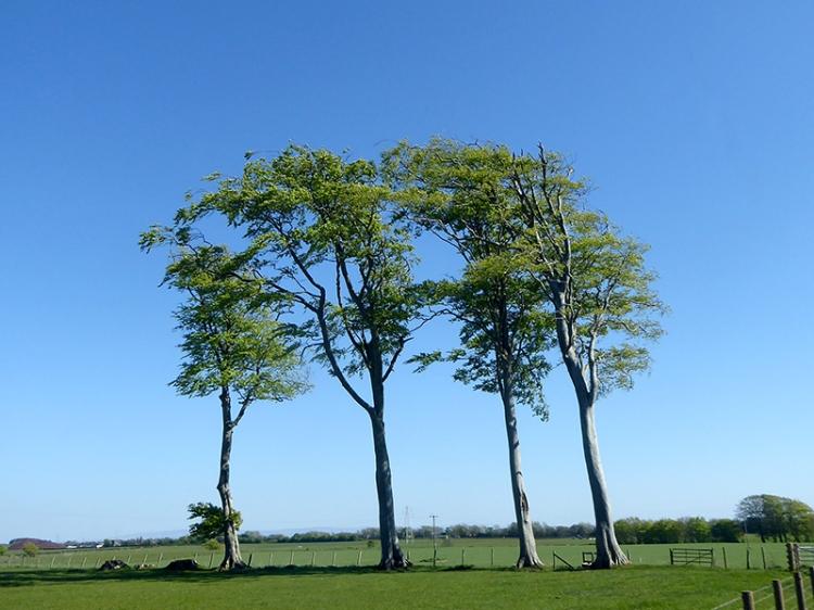 eastriggs trees