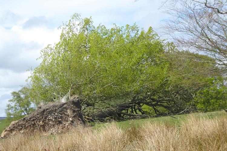 fallen tree in leaf