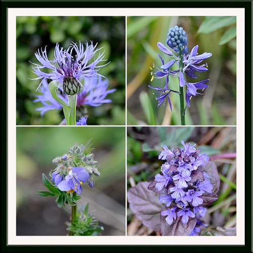 four blue things in garden