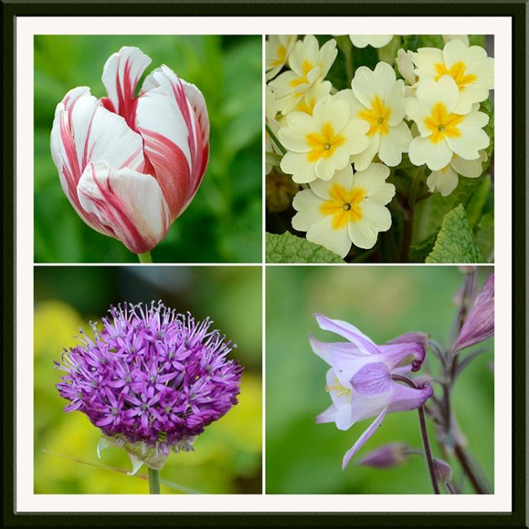 four garden foiwers