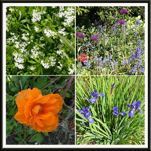 four garden pictures