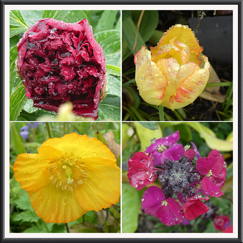 four wet flowers