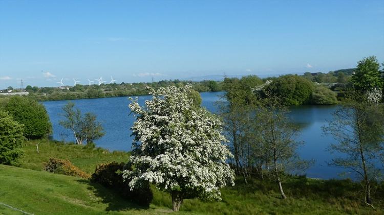 hawthorn Longtown pond