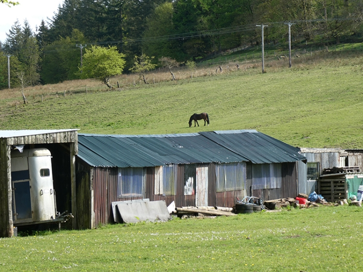 john's stables