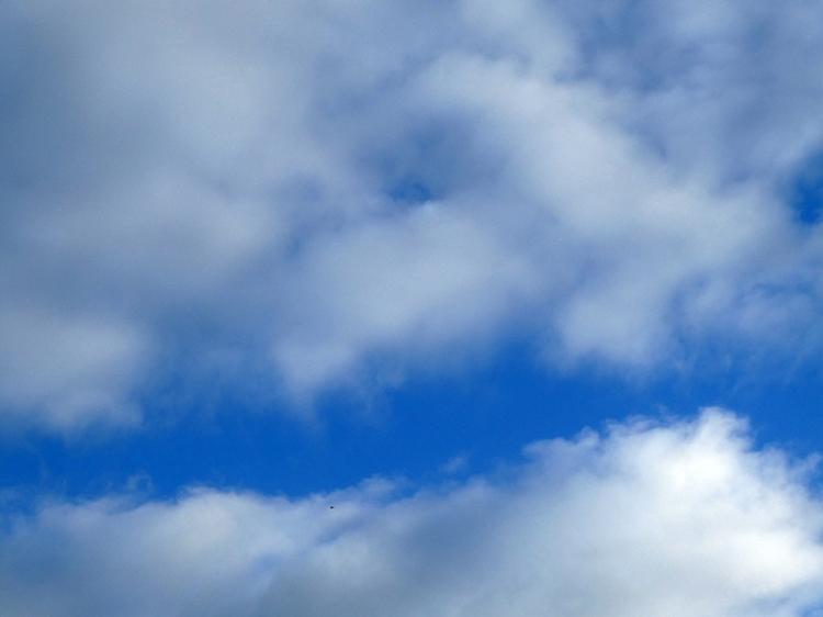 lark in sky