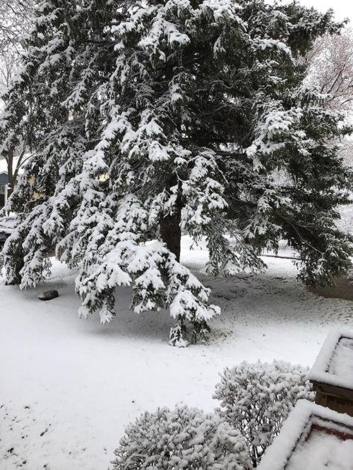 Mary jo may snow
