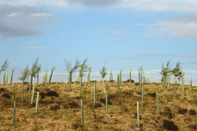 new trees Kerr