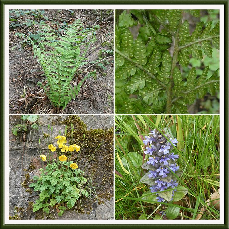 potholm wild flowerrs
