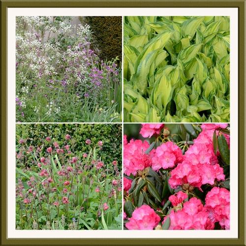 rhododendron, wild garden flowers, hosta