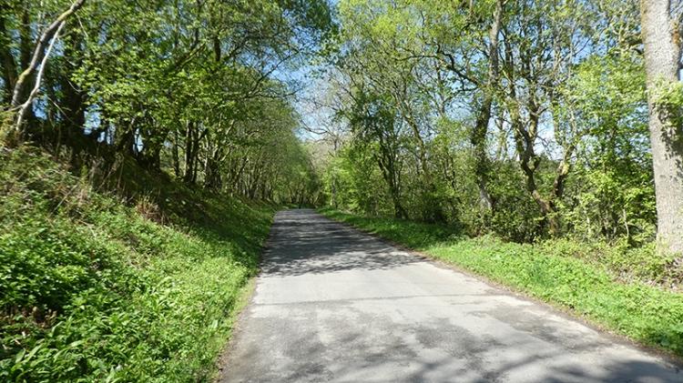 road at enzieholm