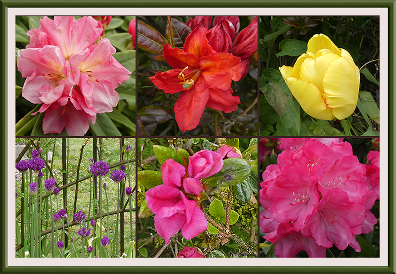 six flowers
