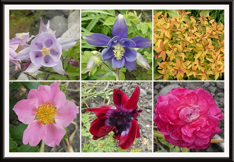 six may colourful flowers after frost