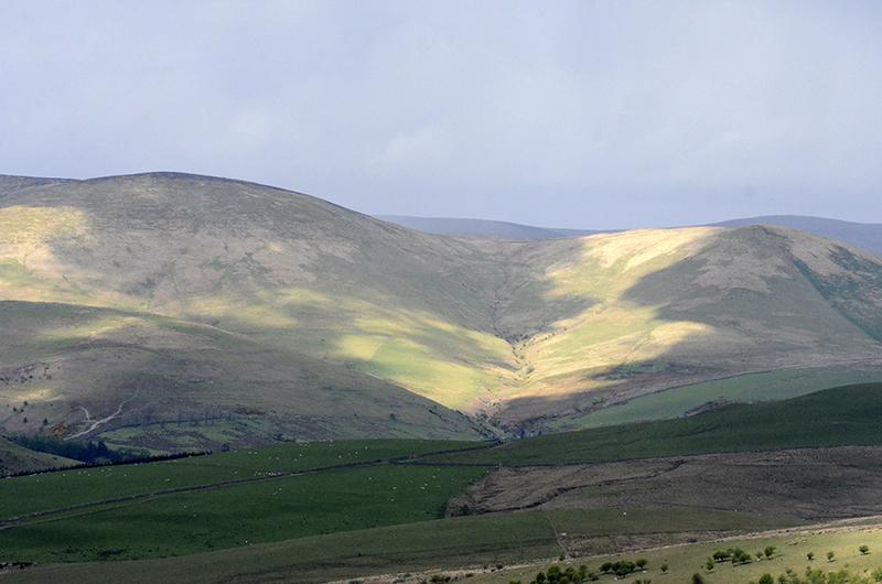 sunshine and shadow ewes 1