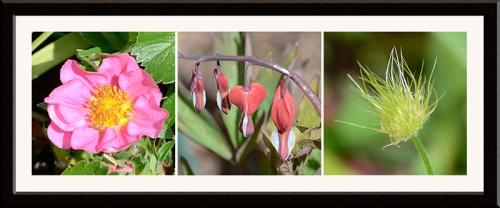 three garden flowers