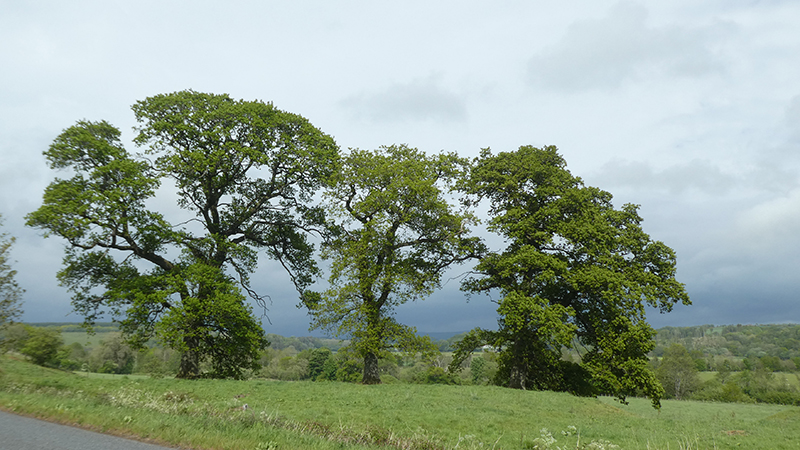 three trees grainstonehead against clouds