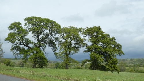 three trees grainstonehead against clouds
