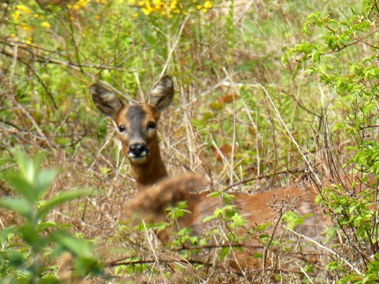 Tony's deer