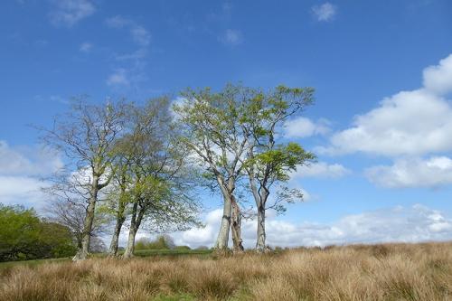 trees near ryehill