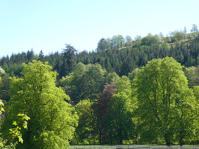 trees on castleholm may