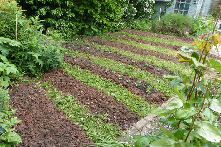 venetia's lawn