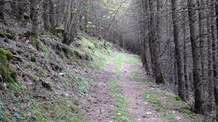 walk through woods above longfauld