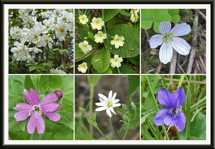 wild flowers longfauld woods