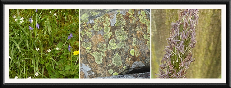 wildflowers, lichen, seed head wauchope road