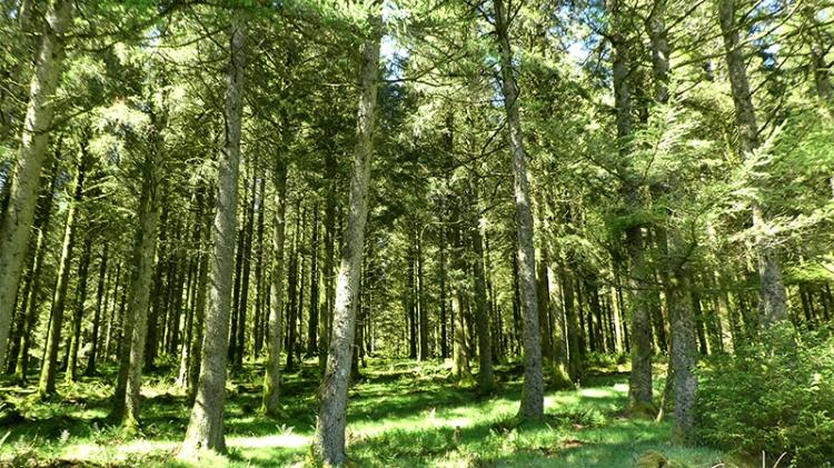wood at tanlawhill