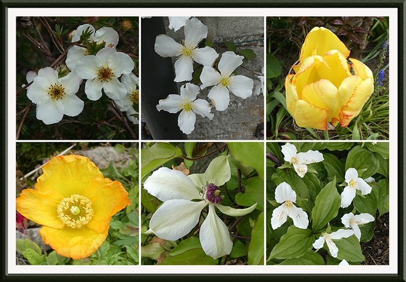 yellow and white survivors may frost